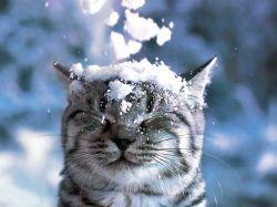 Що значить «як сніг на голову»?