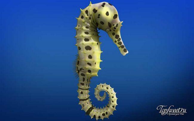 Морський коник. Найповільніші тварини світу