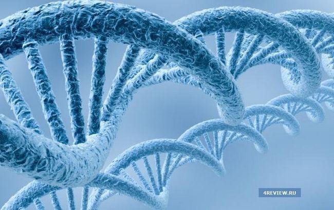 створені штучні ферменти